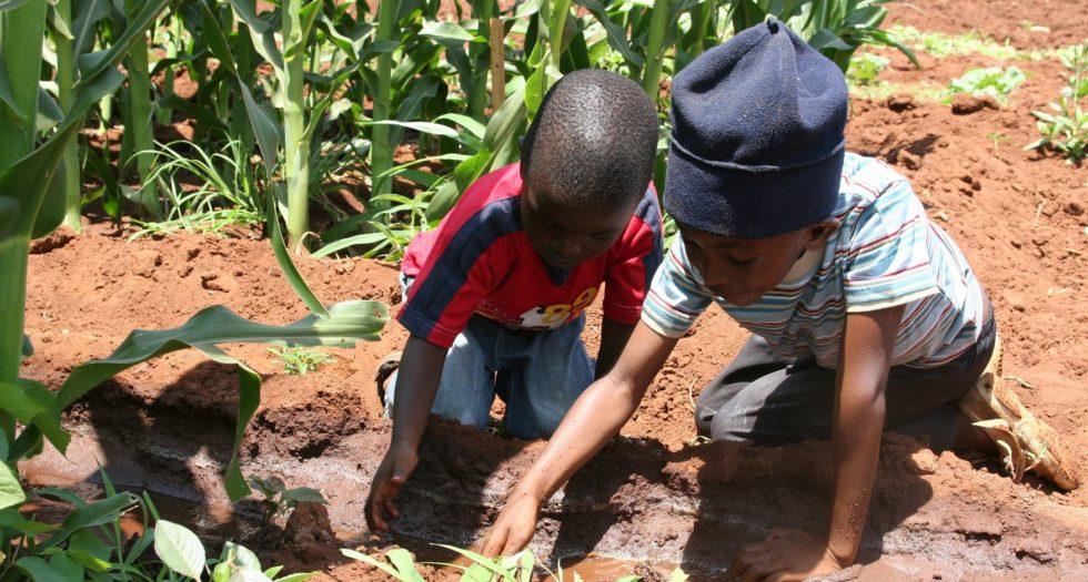 Farming is Cool Rwanda