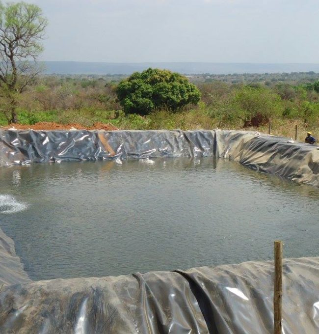Green House- Drip Irrigation