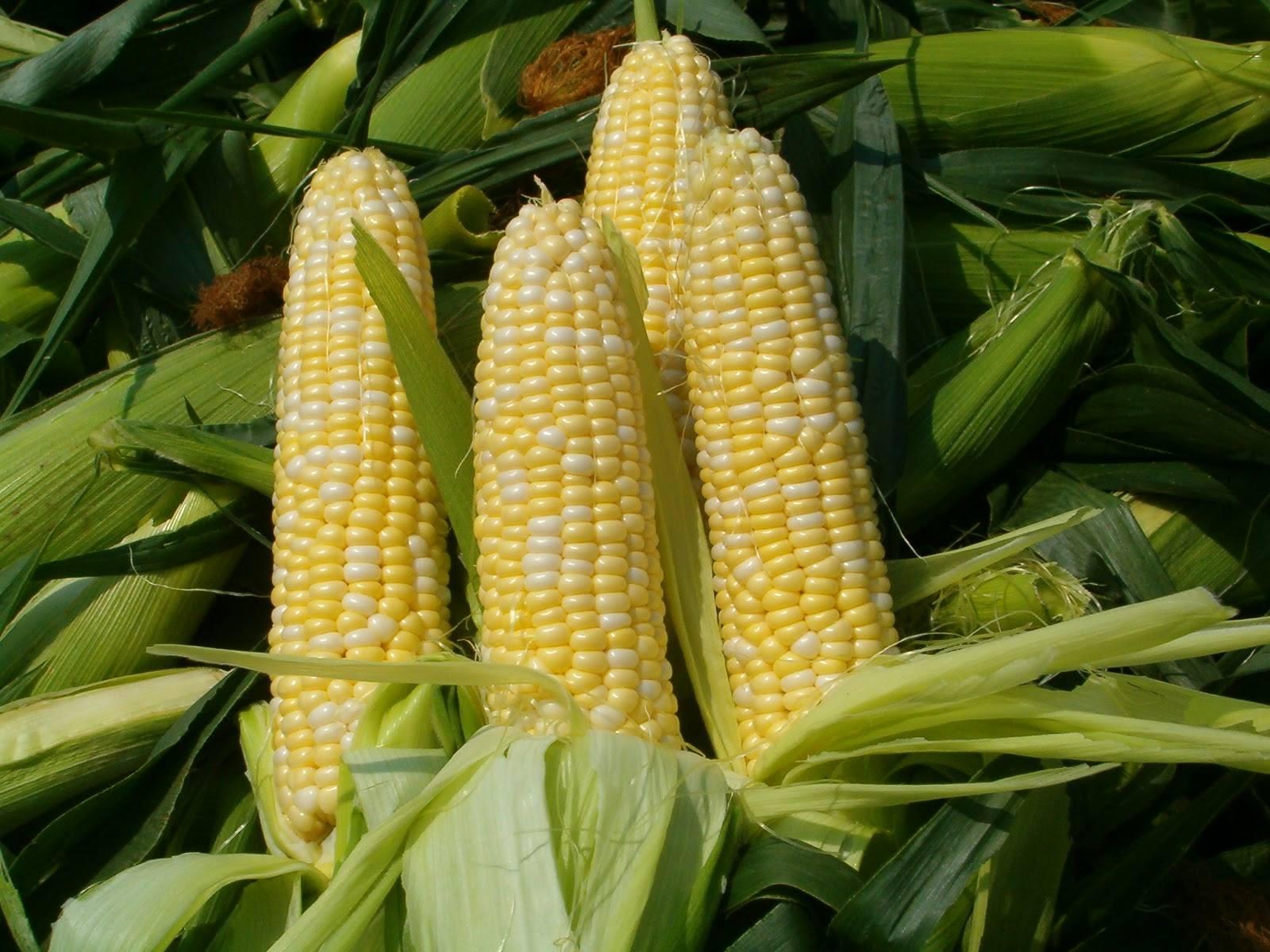 Sustainable Agribusiness
