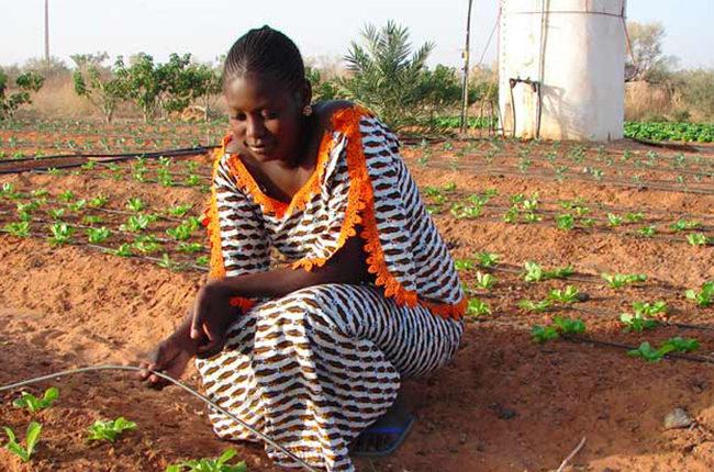 Farming is Cool Tanzania Launch