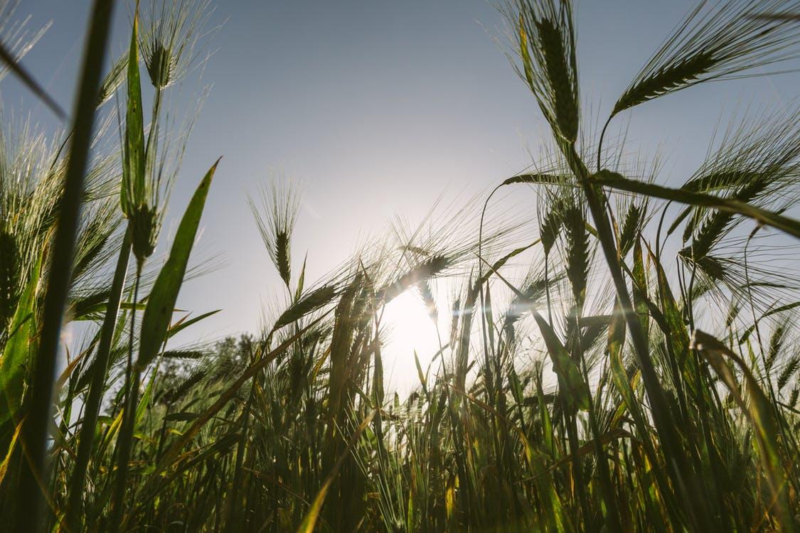 Agribusiness – Balton CP